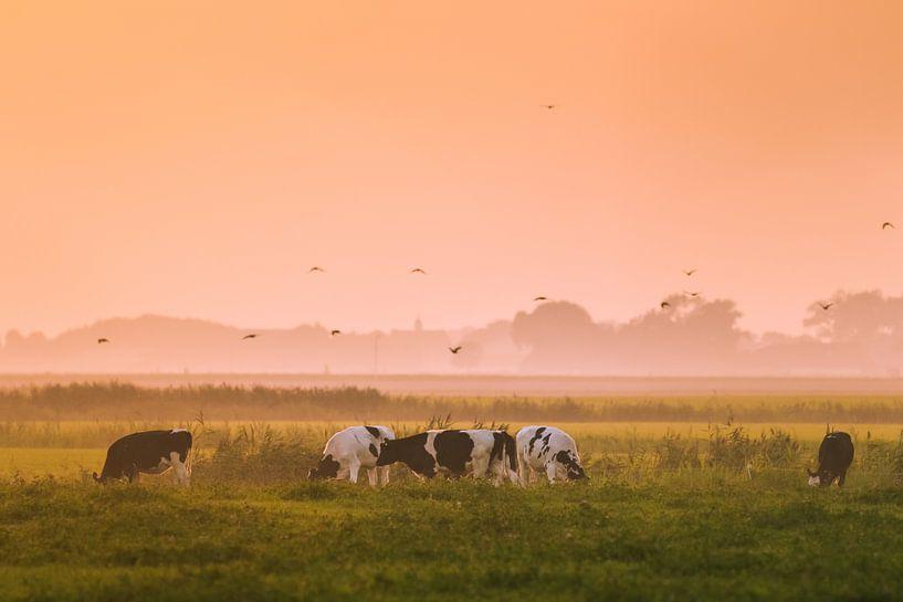 Grazende koeien van Jo Pixel