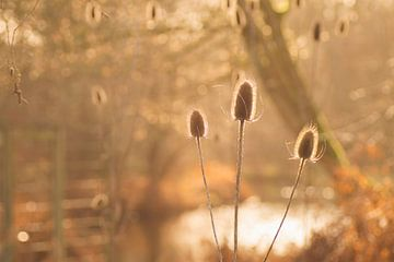 Ein schöner Winternachmittag ( horizontal) von Birgitte Bergman