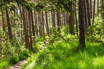 Sonnenstrahlen im Wald von Martina Weidner