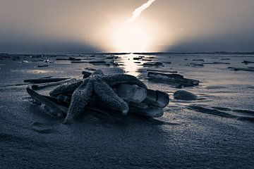 Starfish @ the Beach van Foto van Anno