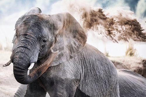 african elephant throws sand, wildlife van