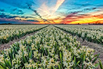 Frühling Landschaft mit Sonnenuntergang von eric van der eijk