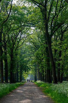 Lochem, Bospad van E. Ruis