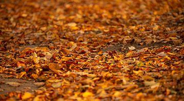 Herfstbladeren op de grond van Michel Knikker