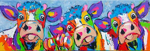 3 koeien blauwgrijs van