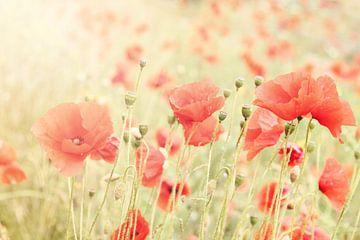 Poppies II sur Christa van Gend