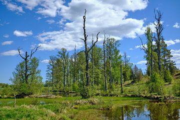 Schwedische Landschaft 150 von Geertjan Plooijer