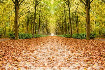 rij bomen in de herfst von Marcel Derweduwen