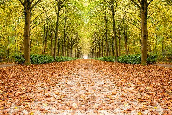rij bomen in de herfst
