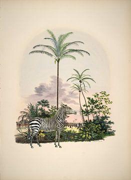 Zebra in tropisch paradijs van Andrea Haase