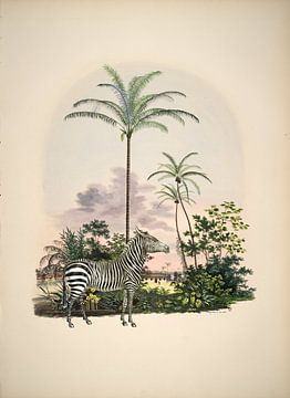 Zebra im Tropenparadies
