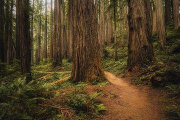 Boy Scout Tree Trail van Joris Pannemans - Loris Photography