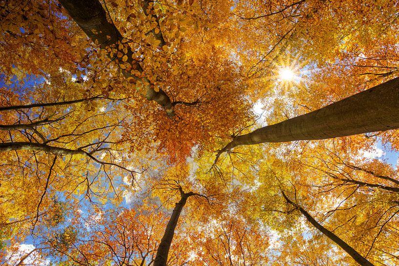 Buchen im Herbst von Tilo Grellmann   Photography