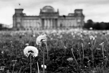 Paardenbloemen voor het Reichstag gebouw