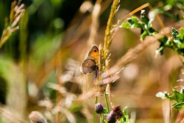 Vlinder von Geert Groot