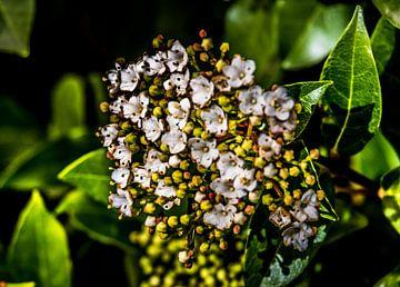 Fleurs de montagne sur Yann Mottaz Photography