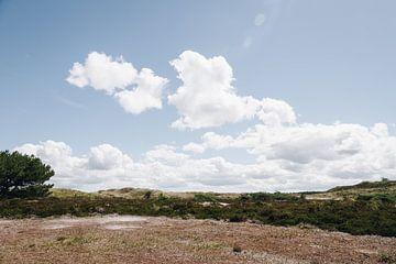Foto von der sonnigen Heidelandschaft in den Dünen von Schoorl | Strandfotografie in den Niederlande von Evelien Lodewijks