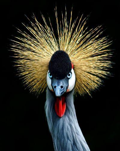 Kraanvogel von John Dekker