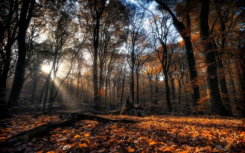 Autumn Fire von Em We