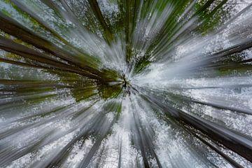 Beweging in het bos van Cathy Roels