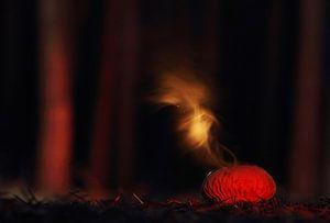 Misteriou puffball