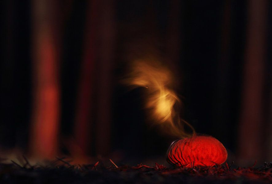 Misteriou puffball van Jose Luis  Rodriquez
