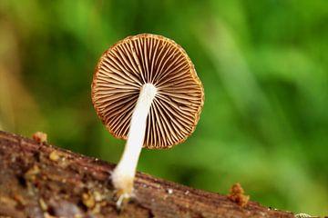 Lamellen van paddenstoel van Frouwkje Fotografie