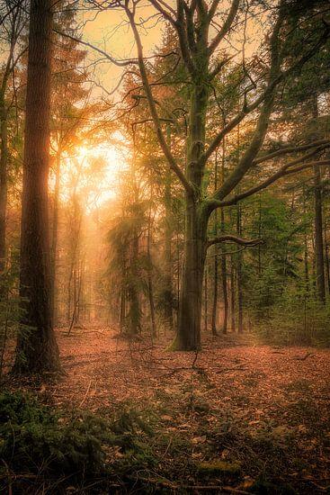 Zonsondergang in het Bos van Tim Abeln