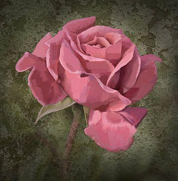 roze roos van Dieter Beselt