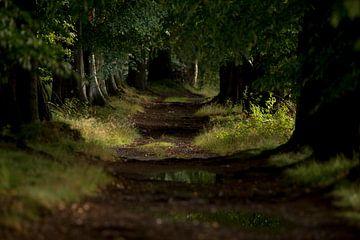 Wald nach kurzem Regen