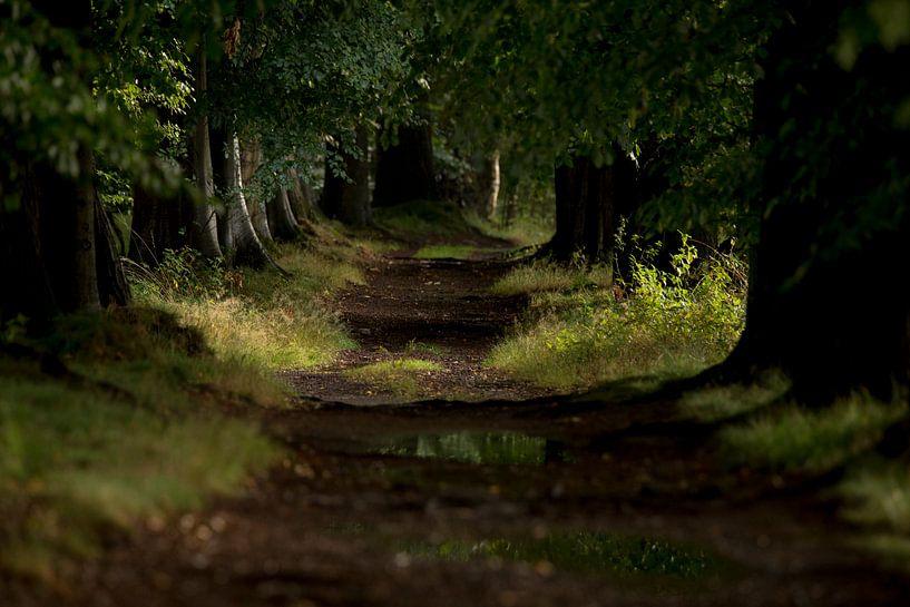 boslaantje net na een regenbui van Paul Wendels
