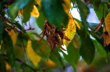 Concept d'automne : L'heure d'automne sur Michael Nägele