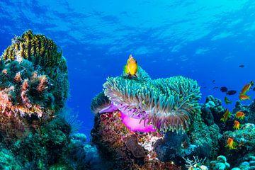Sea life, Roberto Marchegiani van 1x