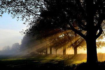 Zonnestralen door de bomen bij een prachtige najaars zonsopkomst van Joyce Derksen