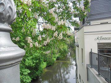 Frühlingsblüten von Helmut Englisch