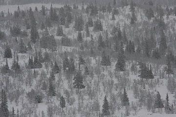 Zicht over een winters bos in Noorwegen von Kris Brackx