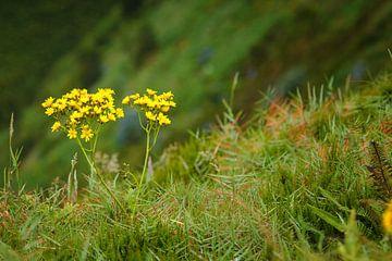 Blumen am Rande einer Klippe von Jan Brons