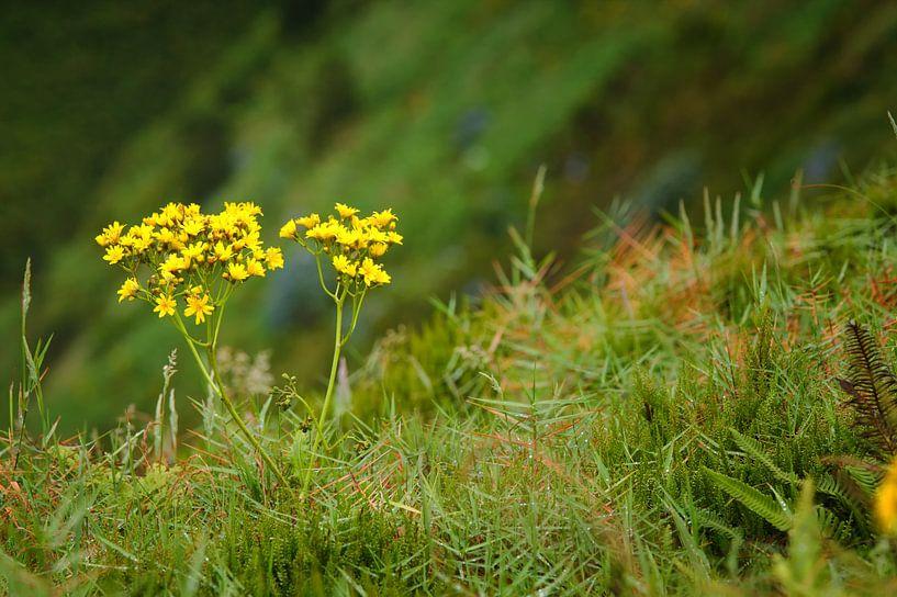 Blumen am Rande einer Klippe sur Jan Brons