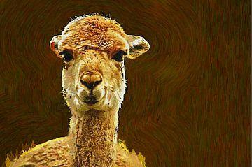 Vicuña-Art von Leo Huijzer