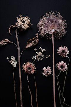 Garten der getrockneten Sommerblumen von Karel Ham