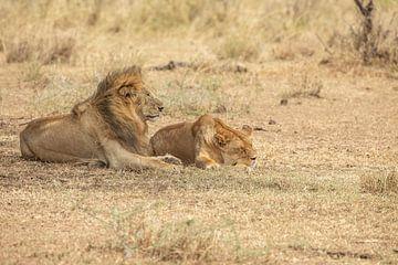 Leeuwen van Gonda van Wijk