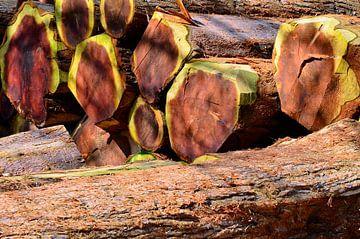 Mammoth Trees - Place of Power van Ingo Laue
