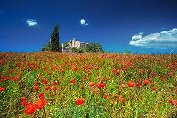 Finca mit Mohnblumenfeld auf Mallorca im Sommer von Fine Art Fotografie