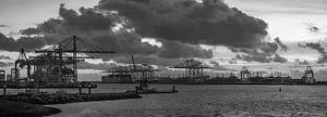 Amaliahaven van