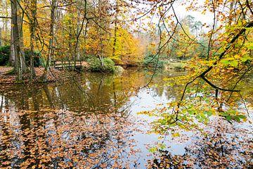 Herbstfarben im Wald mit Wasser und Bäume von Ben Schonewille
