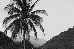 Palmboom vintage