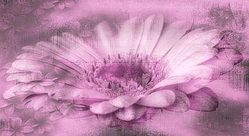 Gerbera roze, met tekst van Rietje Bulthuis
