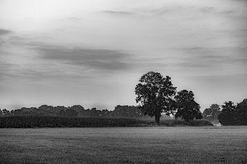 schwarzer Baum von Tania Perneel