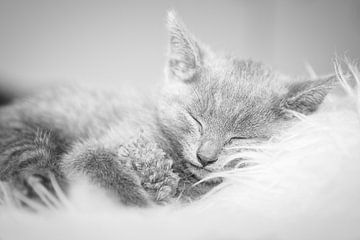 Kätzchen, Katze schwarz und weiß von Wendy Tellier - Vastenhouw