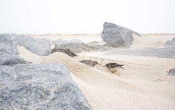 Vogels in zandstorm van Danny Slijfer Natuurfotografie